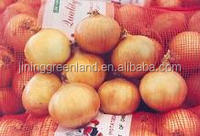 fresh new crop onion from China