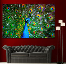 Custom peacock canvas photo prints / canvas art and wall art / banksy art canvas prints