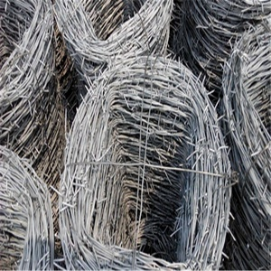 Hot dipped / electro galvanized barbed wire price per 50 kg