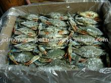 Frozen WR Male Female Blue Crab (callinectes sapidus) with eggs from USA