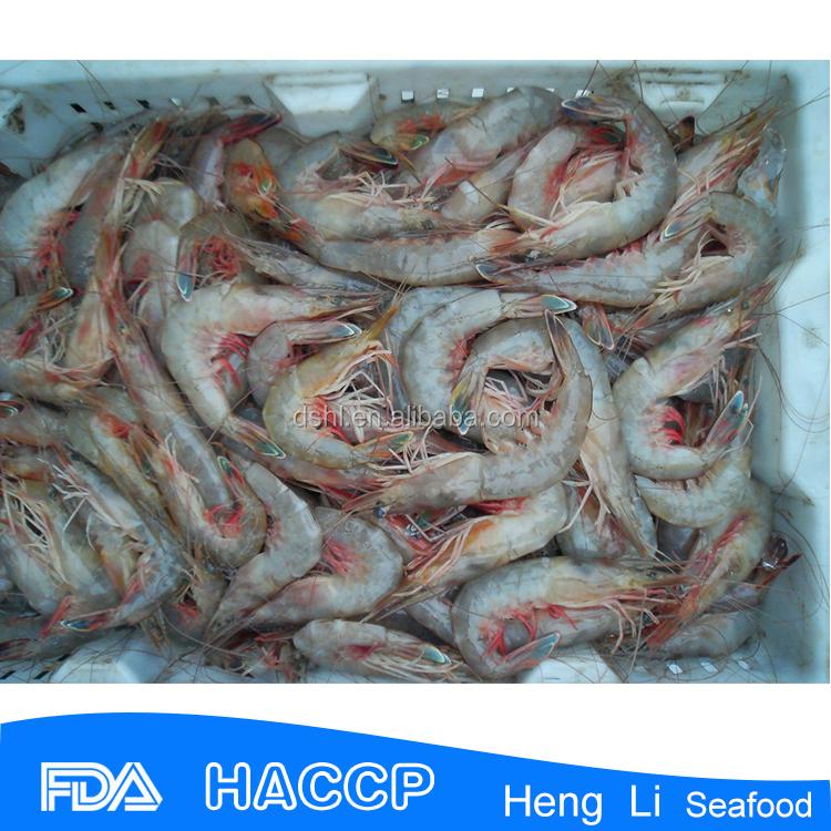 Hl002 wild flash seafood marine shrimp buy sea shrimp for Flash freeze fish