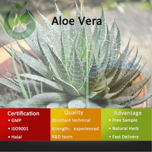 Natural Herb Plant Extract Aloe Vera