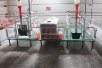 Ddjustable farrowing crate for pigs sales