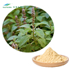 coleus forskohlin extract 100% Natural