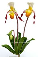 "Paphiopedilum orchid lady slipper 6"" artificial flowers"