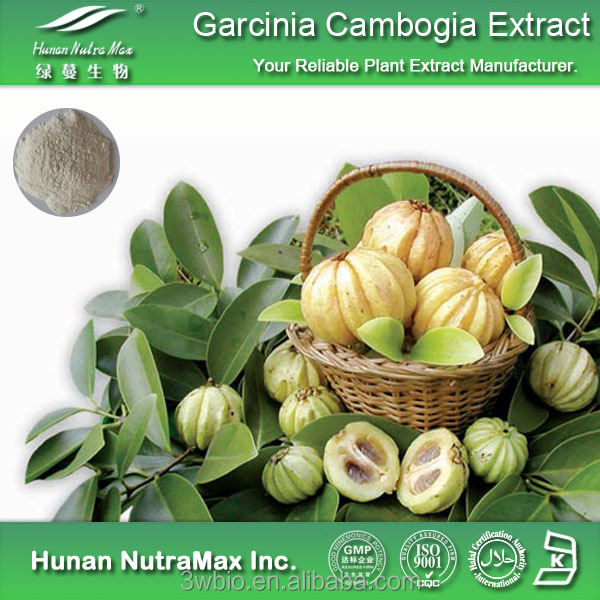 100% natural lose weight plant extract garcinia cambogia powder extract from cGMP manufacturer