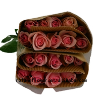 Big peach rose cut roses flower prices Wholesale Grade A with 0.8-1.2kg/bundle from Focus/Yunnan Nirvana