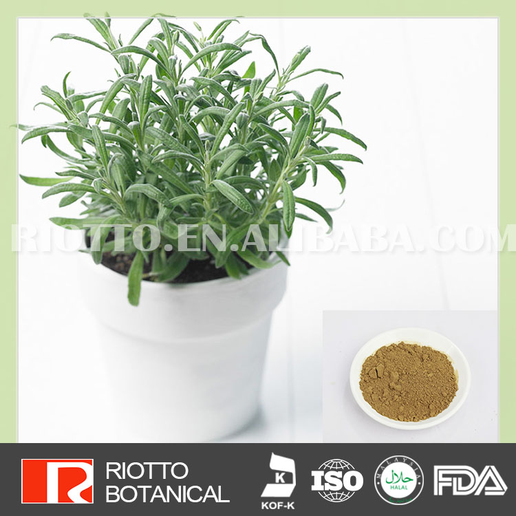 100% natural rosemary extract high quality usnic acid powder