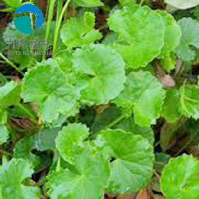Centella Asiatica Extract best quality & competitive price 100% Nature Asiaticoside!!!