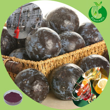 Acai berry fresh fruit/acai berry powder brazil/acai berry brazil export