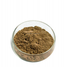 Salep Orchid Extract 10:1