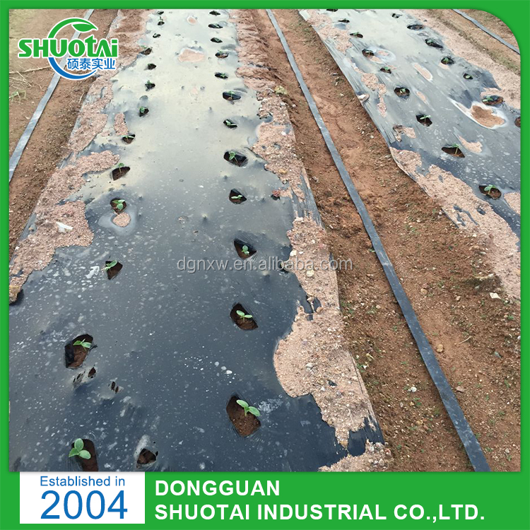 High Quality Black Strawberry Plastic Mulching Laying Plastic Mulch Film