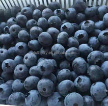 Wholesale IQF Frozen Blueberry Wild and Cultivated Type with Low Price