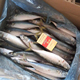 Frozen Horse Mackerel fish whole round 200-300g wholesale