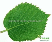 Top Quantity Anti-diabetic Mulberry Leaf Extract 1% DNJ Mulberry Leaf Extract 2%