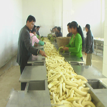 Factory price machine manufacturing banana power industrial automatic processing machine