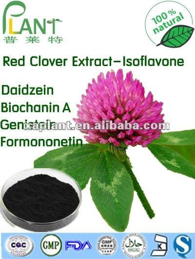 100% Natural High Quality Red Clover Extract (Isoflavone 2.5%-40%)