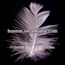 2-4cm white washed duck feather raw material