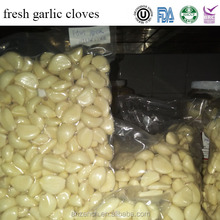 china fresh garlic cloves price for distributor