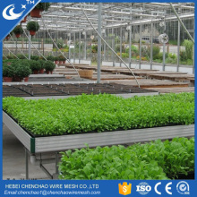 Produce Hydroponic Ebb and Flow Table Agriculture