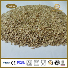 Whole Sales for Organic Oat with Factory Price