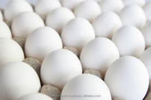 Indian Chicken Egg Price