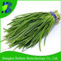 High germination rate Asian vegetable seeds Chinese Chives seeds wholesale