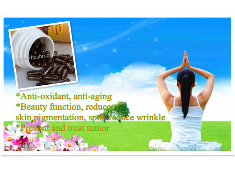 High quality improve immune system and liver function ganoderma extract