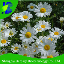 Dalmatian insect flower seeds, Chrysanthemum seeds for planting