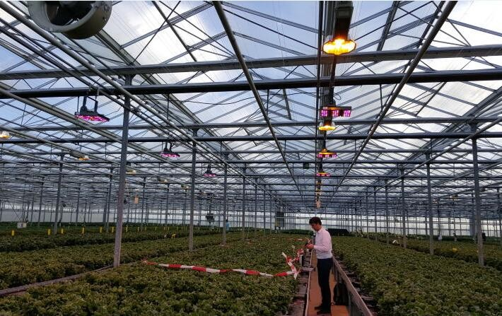 led lighting for seeding and flowering plant high intensity led grow light with 5 years warranty