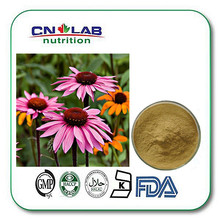 2%, 4% Chicory Acid Echinacea and Goldenseal Capsules