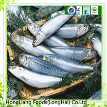Wholesale price frozen sardine fish