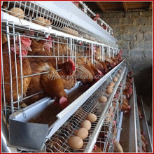 Dar Es Salaam Tanzania Poultry Farm Best Sale Chicken Layers Battery Cages