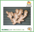 100% dried split ginger on sale