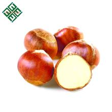 chinese fresh chestnut top quality wholesale price
