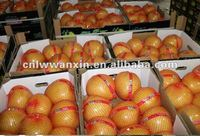 china fresh honey pomelo