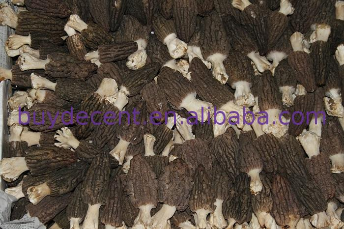 Best quality promotional delicious frozen mushroom type morel/morchella Yunnan tonifying Yang herbal with better service