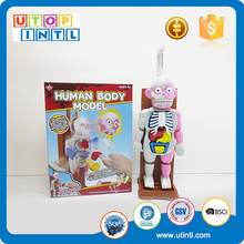 Children playing battery operated human boby model for doctor toy
