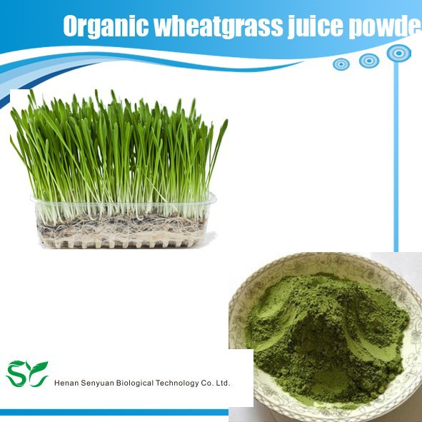 High quality Natural Organic barley grass juice powder
