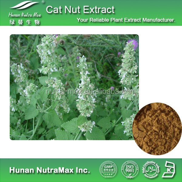 Cat Nut Extract, Cat Nut Extract Powder, Natural Cat Nut Extract