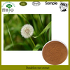 100% natural dandelion root extract