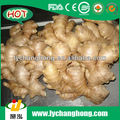 healthy food fresh ginger 20 reefer container