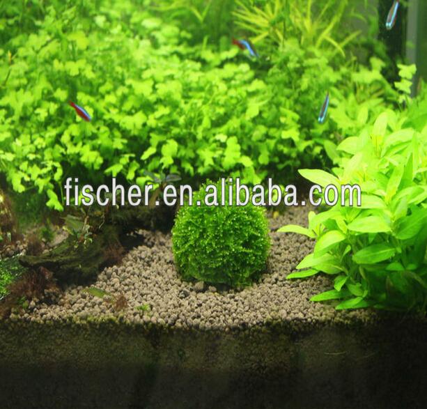 wholesale marimo cladophora live aquarium plant moss balls
