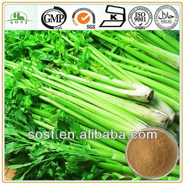Plant Extract Organic Natural Celery Juice Powder