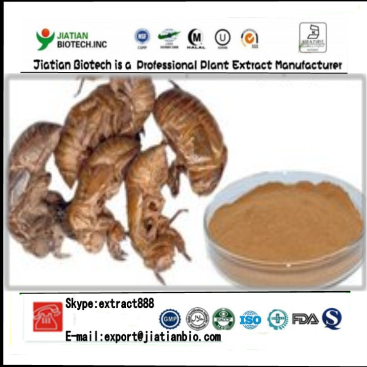 High quality natural periostracum cicada extract powder