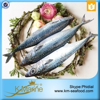 Seafoods frozen mackerel fish
