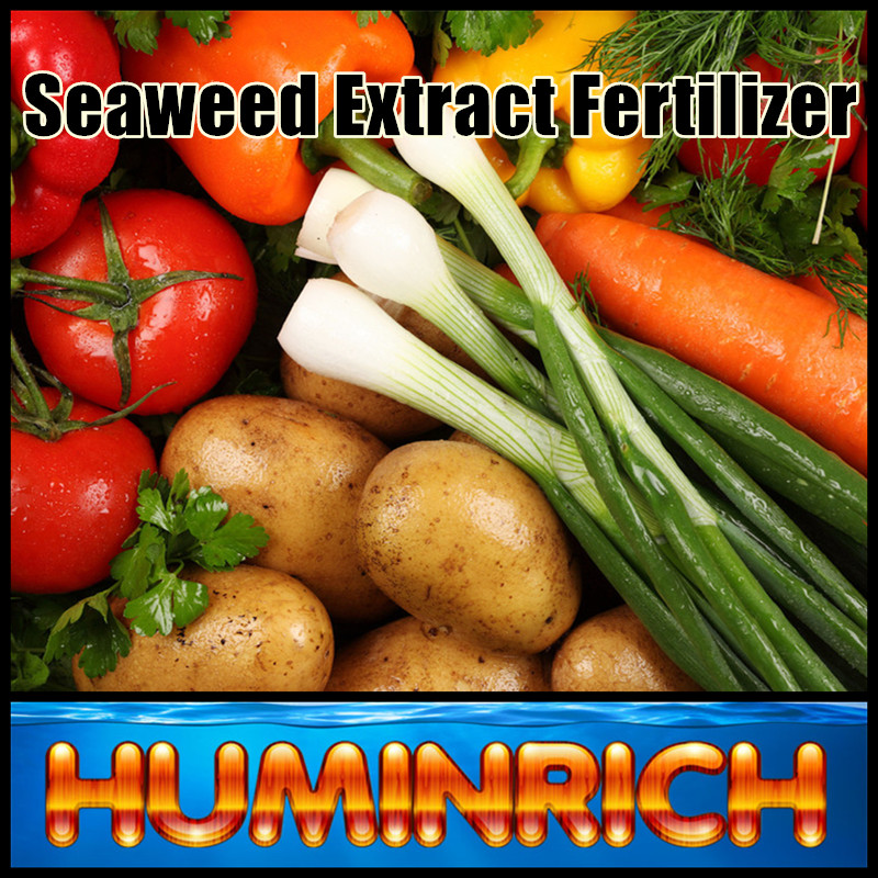 Huminrich Hydroponic Nutrient Natural Ocean Fertilizer Sea Kelp Extracted Powder