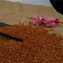 wholesale High Quality red Broom Corn Millet/Millet Seed