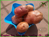 (HOT)China's best chips/chips fresh potato seeds,Exports Europe and the United States