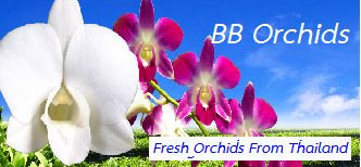 BB Orchid